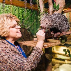 Woman feeding a prehensile-tailed porcupine