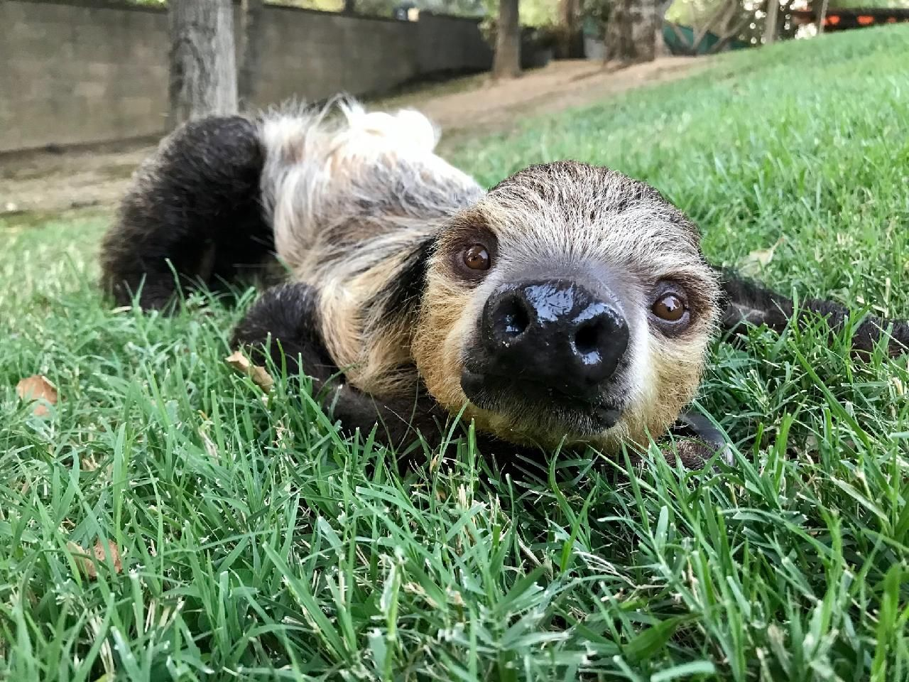 A Sloth's Journey - Part One